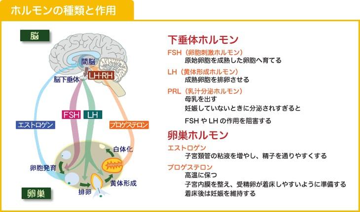 ホルモンの種類と作用